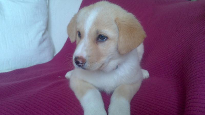 Bildertagebuch - Lou Lou, entspanntes - schnuggeliges Hundekind ...  21383750bc