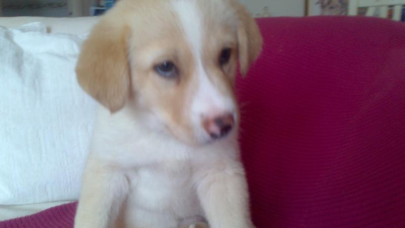 Bildertagebuch - Lou Lou, entspanntes - schnuggeliges Hundekind ...  21383752vq