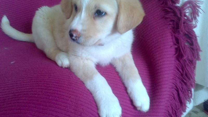 Bildertagebuch - Lou Lou, entspanntes - schnuggeliges Hundekind ...  21383754jg