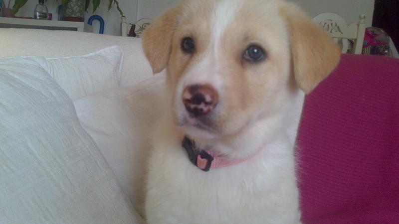 Bildertagebuch - Lou Lou, entspanntes - schnuggeliges Hundekind ...  21383758yd