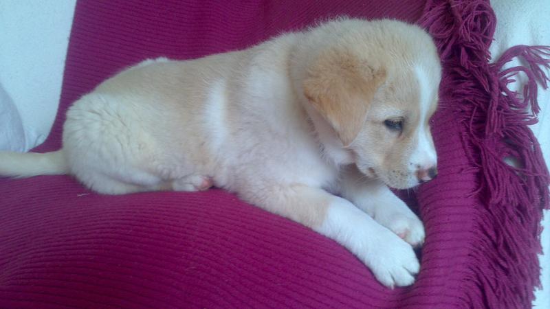 Bildertagebuch - Lou Lou, entspanntes - schnuggeliges Hundekind ...  21383768gc