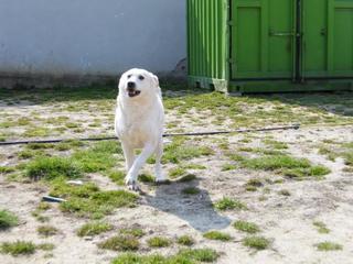Angel lebte glücklich in Österreich RIP hübsche Maus 21396297jy