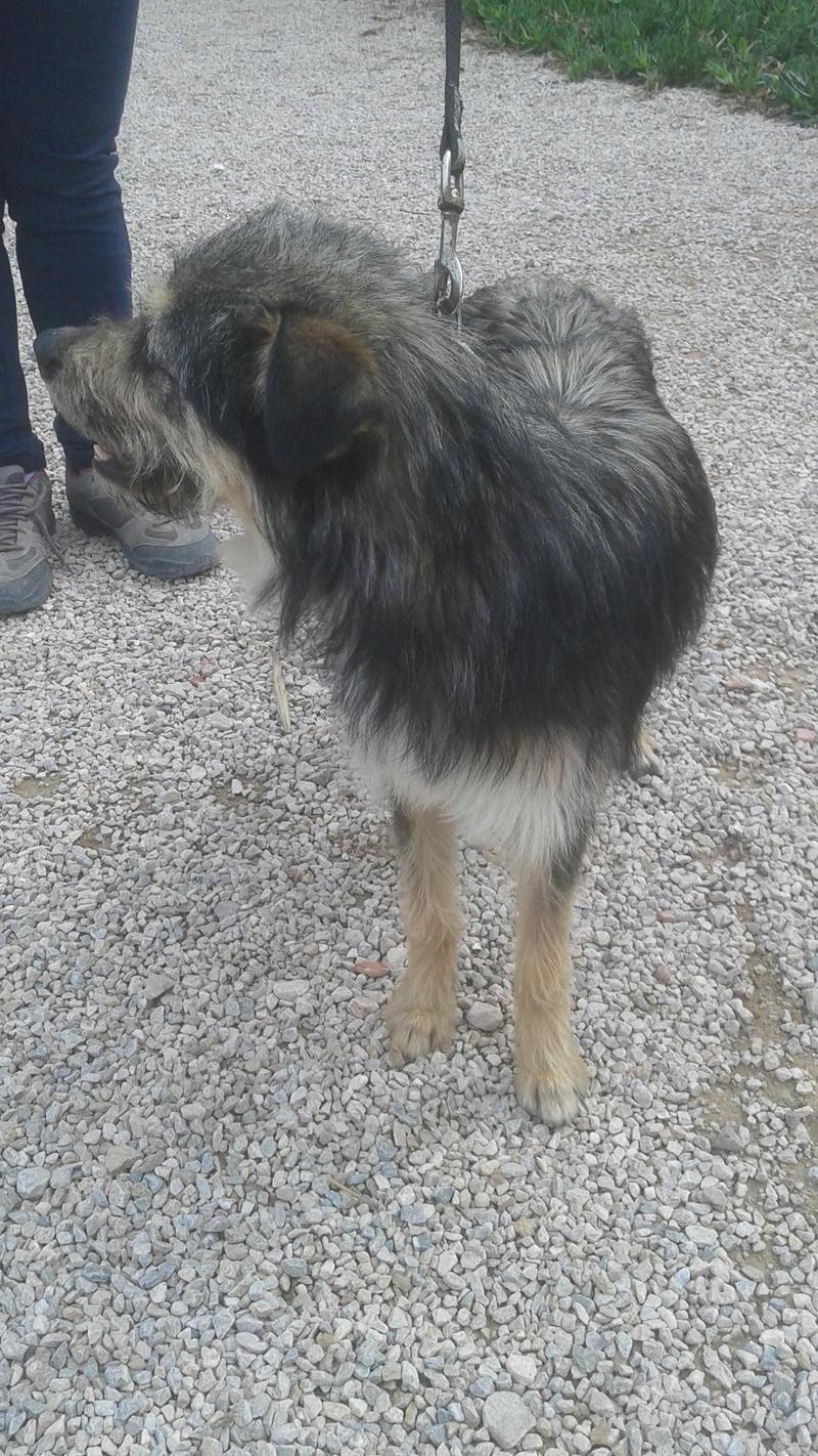 Bildertagebuch - Nepomuk, der verschmuste, braun-schwarzer Terrier Mischling...in Spanien sein ZUHAUSE GEFUNDEN! 21490927jw