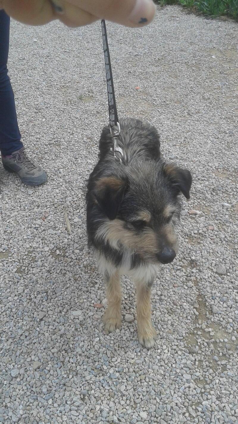 Bildertagebuch - Nepomuk, der verschmuste, braun-schwarzer Terrier Mischling...in Spanien sein ZUHAUSE GEFUNDEN! 21490928st