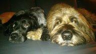 Happy End von Phoebe (Asia) und Maya (Shila) 21526631wn