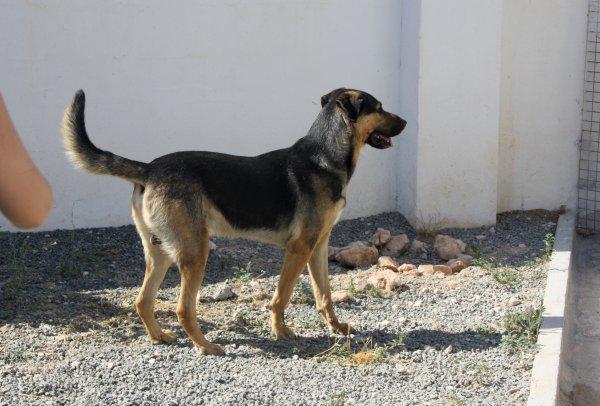 Bildertagebuch - Toro, toller Prachtbursche ... wartet schon so lange auf seiner eigenen Familie - in Spanien ZUHAUSE GEFUNDEN! 21594976kk