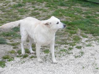 Angel lebte glücklich in Österreich RIP hübsche Maus 21598555to