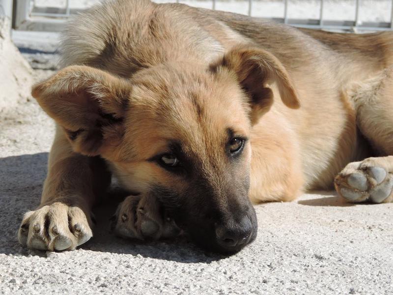 Bildertagebuch - Kito, junger und wunderschöner Hundejunge ... ein Hundekumpel fürs Leben - hat in Spanien sein ZUHAUSE gefunden! 21614564dd