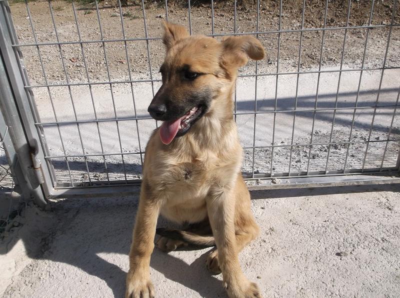 Bildertagebuch - Kito, junger und wunderschöner Hundejunge ... ein Hundekumpel fürs Leben - hat in Spanien sein ZUHAUSE gefunden! 21614566ei