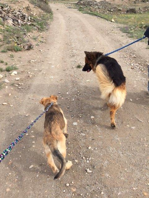Bildertagebuch - Kito, junger und wunderschöner Hundejunge ... ein Hundekumpel fürs Leben - hat in Spanien sein ZUHAUSE gefunden! 21614571rc