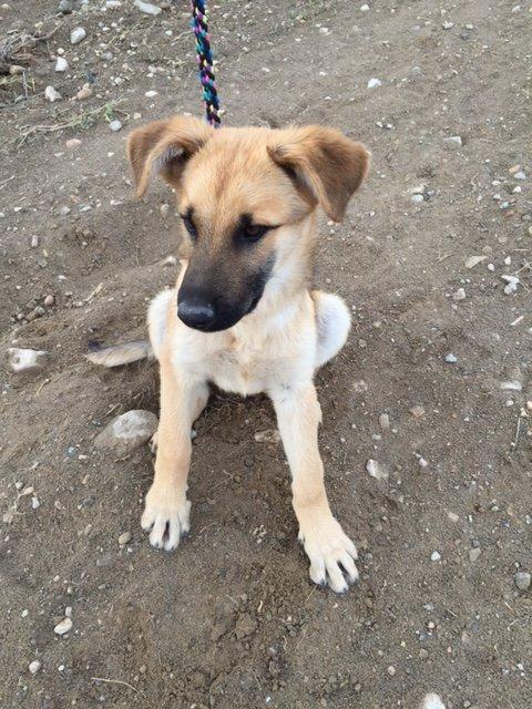 Bildertagebuch - Kito, junger und wunderschöner Hundejunge ... ein Hundekumpel fürs Leben - hat in Spanien sein ZUHAUSE gefunden! 21614572ak