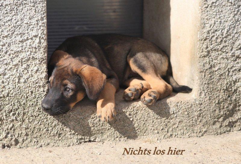 Bildertagebuch - BALTO, wo darf dieser süße Kerl Zuhause sein? - wird über andere Orga vermittelt. 21687608ly