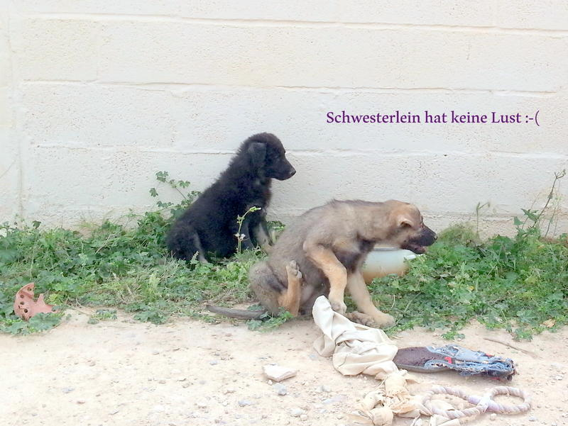 Bildertagebuch - Mitch, süßes Kuschelbärchen ... 21835194wo