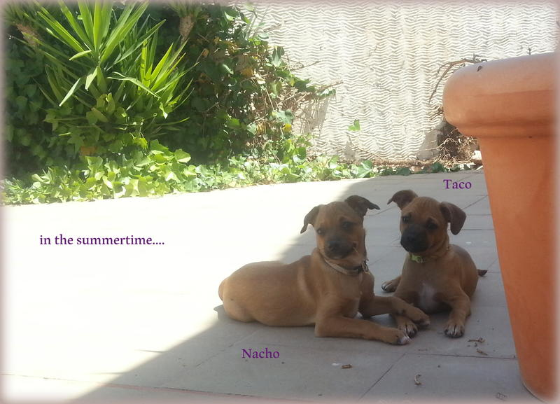 Bildertagebuch - Nacho, herziger kleiner Hundeschnuggel ...VERMITTELT! 21876188st