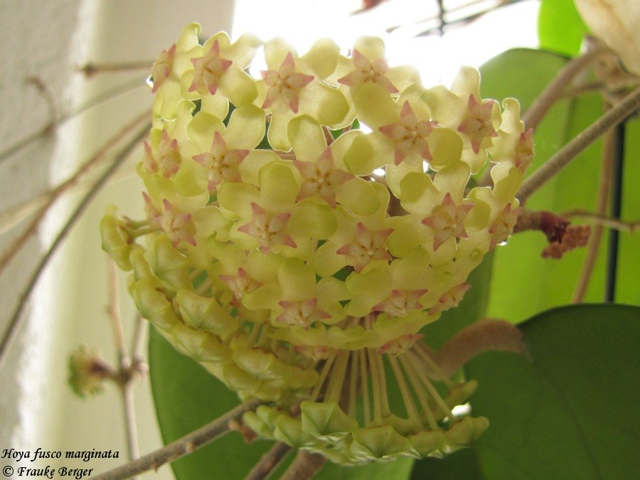 Blüten 2015 - Seite 2 21899130xz