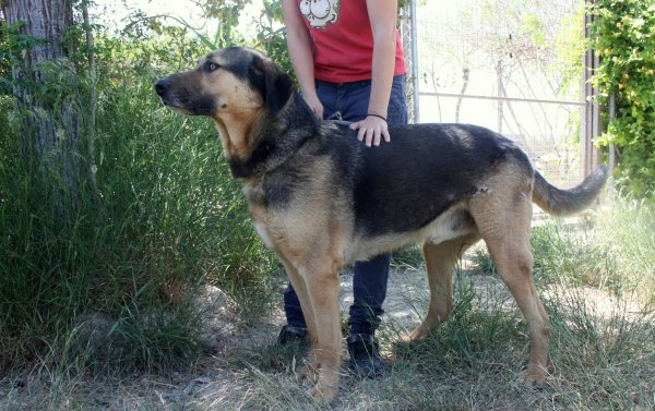 Bildertagebuch - Toro, toller Prachtbursche ... wartet schon so lange auf seiner eigenen Familie - in Spanien ZUHAUSE GEFUNDEN! 21986031mc
