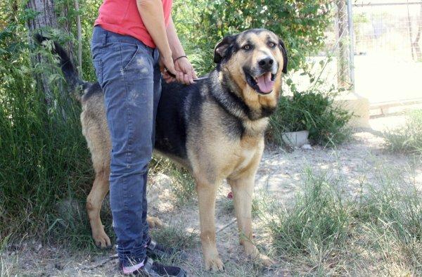 Bildertagebuch - Toro, toller Prachtbursche ... wartet schon so lange auf seiner eigenen Familie - in Spanien ZUHAUSE GEFUNDEN! 21986036sx