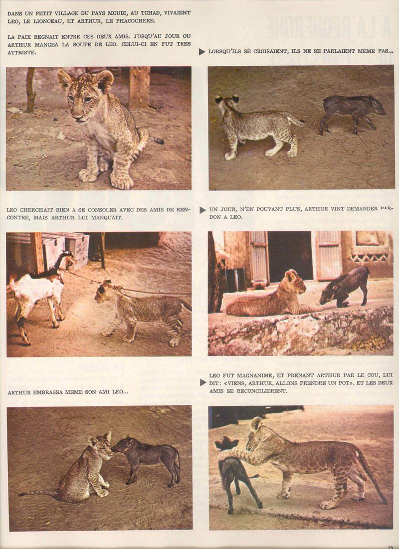 """- Le """"Mouflon du 5 éme REI et """" Duule"""" du 2 éme REI. 22192468si"""