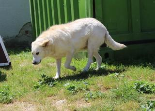 Angel lebte glücklich in Österreich RIP hübsche Maus 22223916jo