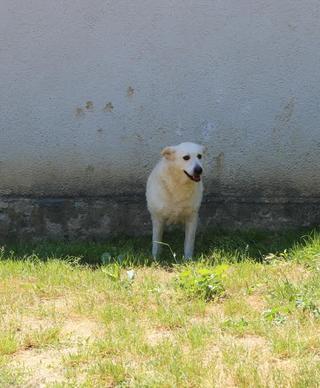 Angel lebte glücklich in Österreich RIP hübsche Maus 22223917qm
