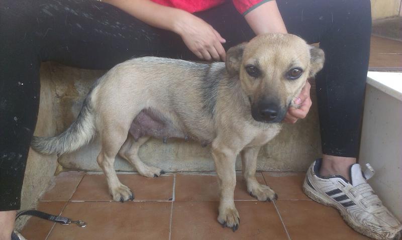Bildertagebuch - Termi, eine kleine Maus mit den großen fragenden Augen ... die bisher ein sehr trauriges Leben hatte - hat ihr ZUHAUSE IN SPANIEN GEFUNDEN! 22249378sk