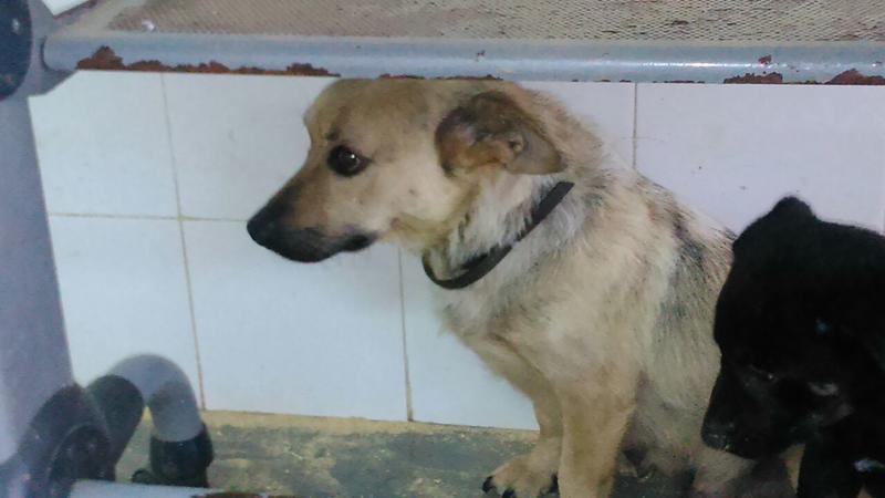 Bildertagebuch - Termi, eine kleine Maus mit den großen fragenden Augen ... die bisher ein sehr trauriges Leben hatte - hat ihr ZUHAUSE IN SPANIEN GEFUNDEN! 22249390gn