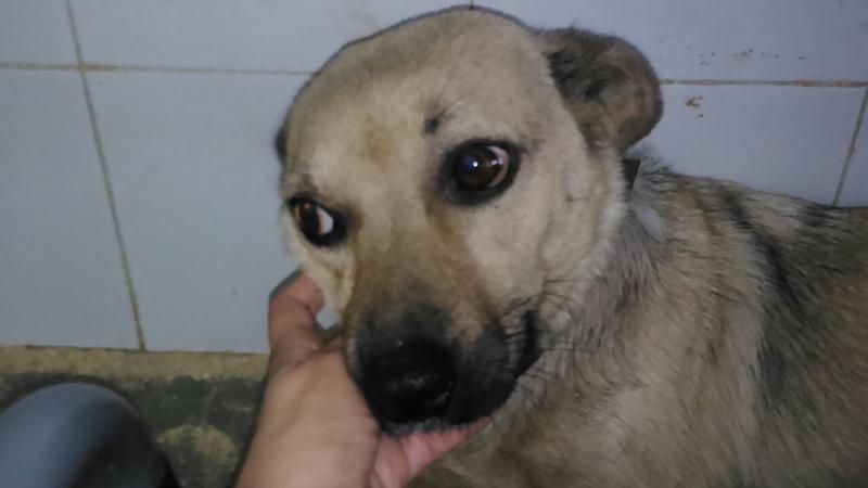 Bildertagebuch - Termi, eine kleine Maus mit den großen fragenden Augen ... die bisher ein sehr trauriges Leben hatte - hat ihr ZUHAUSE IN SPANIEN GEFUNDEN! 22249397vk