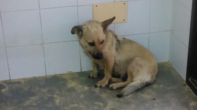 Bildertagebuch - Termi, eine kleine Maus mit den großen fragenden Augen ... die bisher ein sehr trauriges Leben hatte - hat ihr ZUHAUSE IN SPANIEN GEFUNDEN! 22249400yr