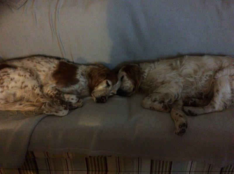 Herzliche Grüße von den HPiN Hunden Regina-jetzt Ina-, Baco, Flora und Luna  22308388si