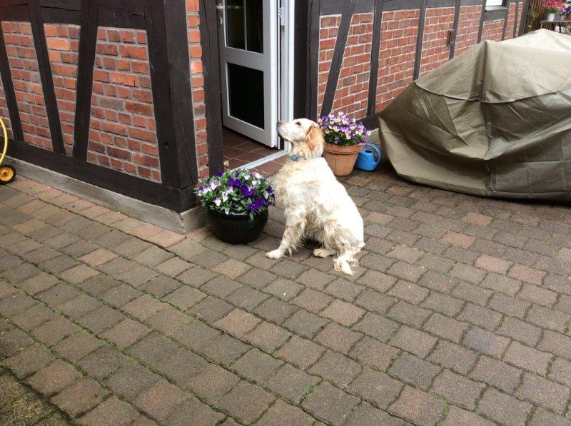 Herzliche Grüße von den HPiN Hunden Regina-jetzt Ina-, Baco, Flora und Luna  22308389ld