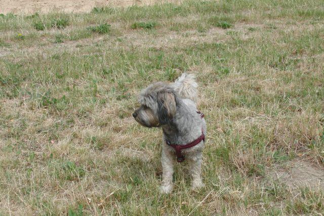 Zulu............mein kleiner Pflegehund 22317668ue