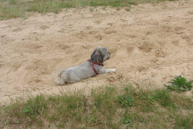 Zulu............mein kleiner Pflegehund 22317698qj