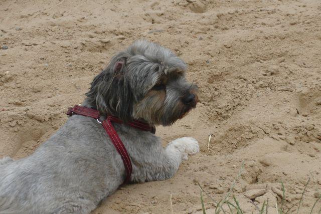 Zulu............mein kleiner Pflegehund 22317699ku