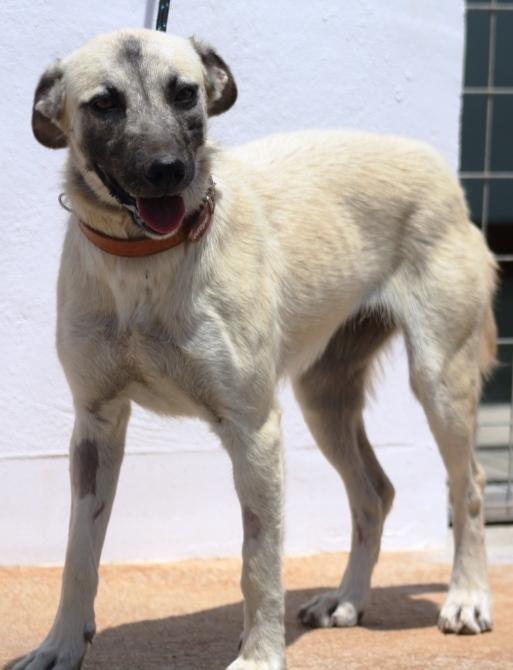 Bildertagebuch - Tulip, freundliches und liebes Hundemädchen ... ihr einsames Leben hat ein Ende - in England ZUHAUSE GEFUNDEN! 22358987ar