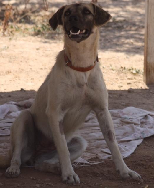 Bildertagebuch - Tulip, freundliches und liebes Hundemädchen ... ihr einsames Leben hat ein Ende - in England ZUHAUSE GEFUNDEN! 22358989se