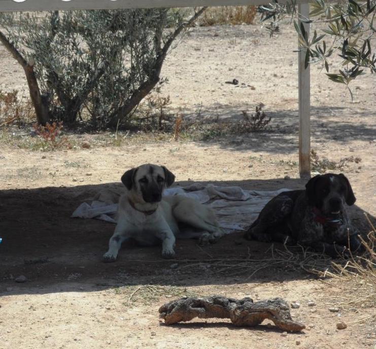 Bildertagebuch - Tulip, freundliches und liebes Hundemädchen ... ihr einsames Leben hat ein Ende - in England ZUHAUSE GEFUNDEN! 22358993oq