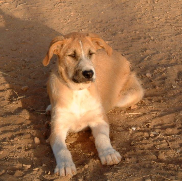 Bildertagebuch - Gemma, kleines Hundemädchen mit großen Pfoten sucht Kuschelplatz auf Lebenszeit - VERMITTELT - 22476680br