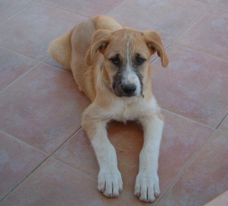 Bildertagebuch - Gemma, kleines Hundemädchen mit großen Pfoten sucht Kuschelplatz auf Lebenszeit - VERMITTELT - 22476681oi