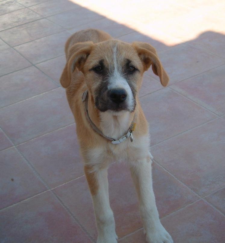 Bildertagebuch - Gemma, kleines Hundemädchen mit großen Pfoten sucht Kuschelplatz auf Lebenszeit - VERMITTELT - 22476682bd