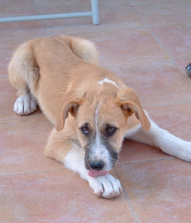 Bildertagebuch - Gemma, kleines Hundemädchen mit großen Pfoten sucht Kuschelplatz auf Lebenszeit - VERMITTELT - 22476683iu