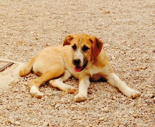 Bildertagebuch - Gemma, kleines Hundemädchen mit großen Pfoten sucht Kuschelplatz auf Lebenszeit - VERMITTELT - 22476684rf