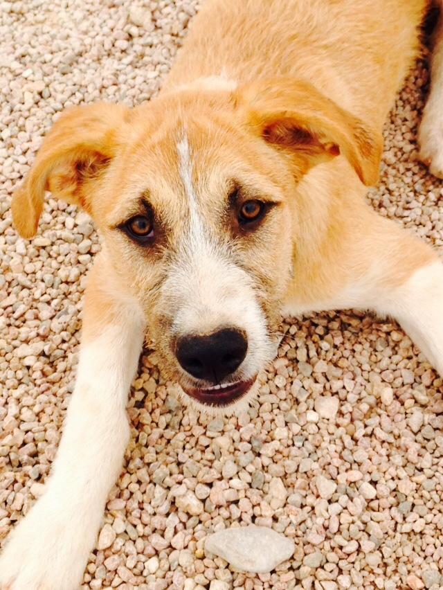 Bildertagebuch - Gemma, kleines Hundemädchen mit großen Pfoten sucht Kuschelplatz auf Lebenszeit - VERMITTELT - 22476686qc