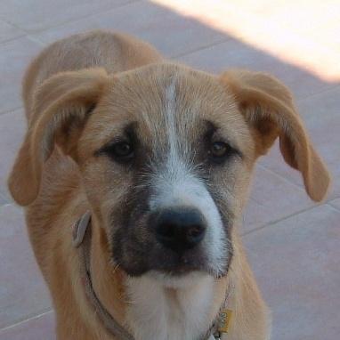 Bildertagebuch - Gemma, kleines Hundemädchen mit großen Pfoten sucht Kuschelplatz auf Lebenszeit - VERMITTELT - 22476687ie
