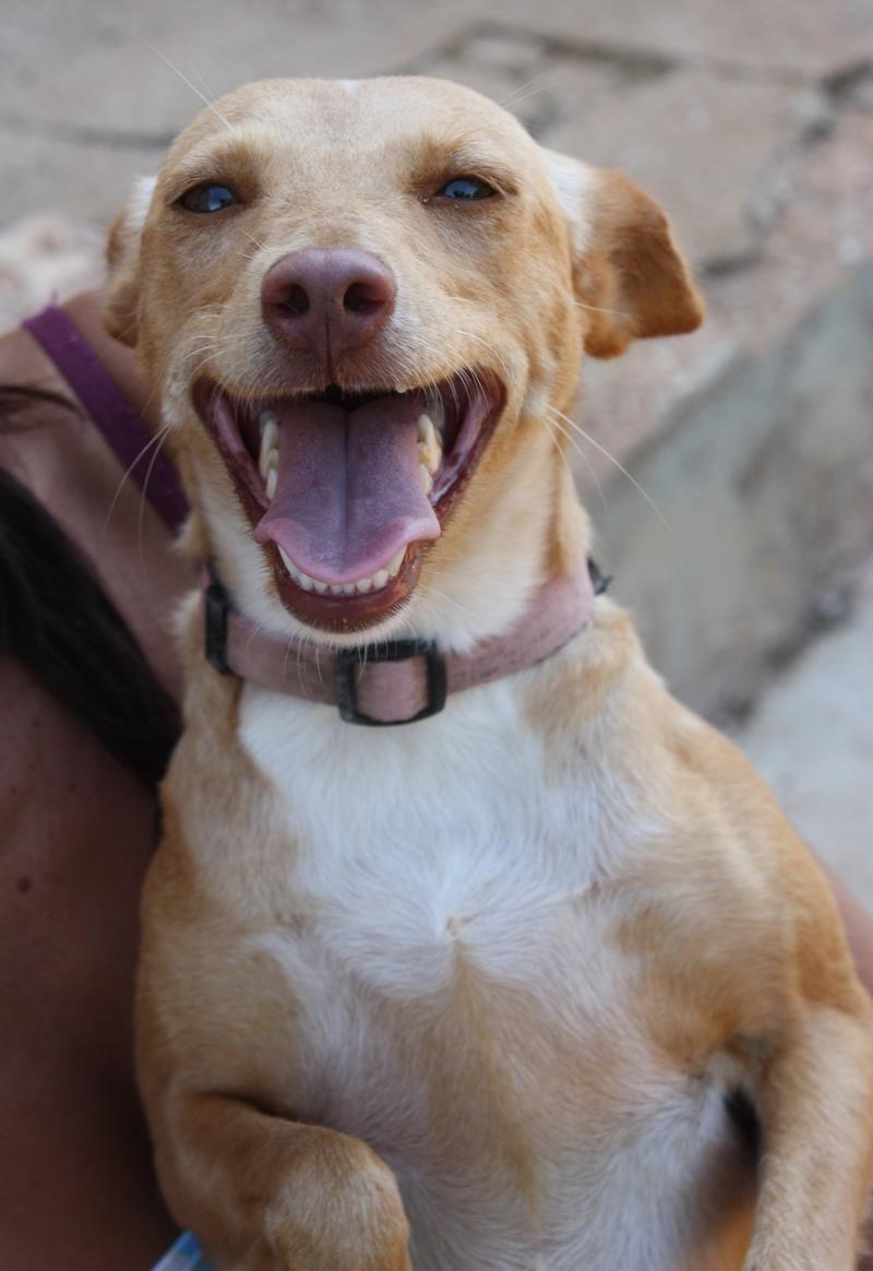 Bildertagebuch - Ashira, ein süßes und liebes Mädel ... die Maus liebt es zu schmusen und zu knuddeln - in Spanien ZUHAUSE GEFUNDEN! 22525523iv
