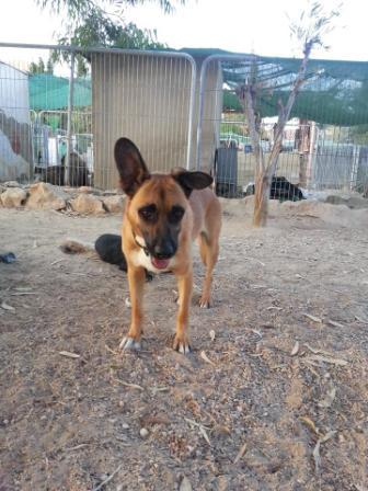 Bildertagebuch - Dingo, ein Schlappohr zum Verlieben ! - Hat in Spanien sein ZUHAUSE gefunden! 22530017xo