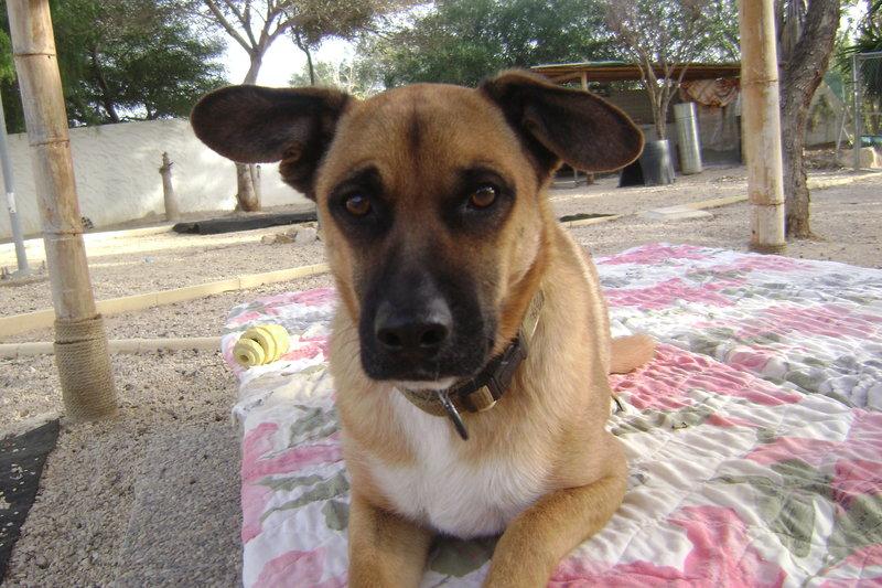 Bildertagebuch - Dingo, ein Schlappohr zum Verlieben ! - Hat in Spanien sein ZUHAUSE gefunden! 22530020vj