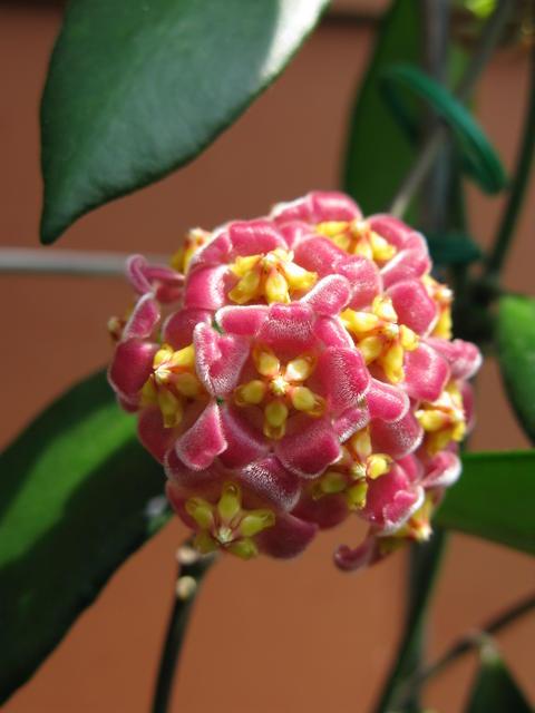 Blüten 2015 - Seite 3 22579114eu