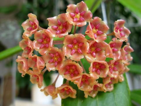 Blüten 2015 - Seite 3 22579172ue