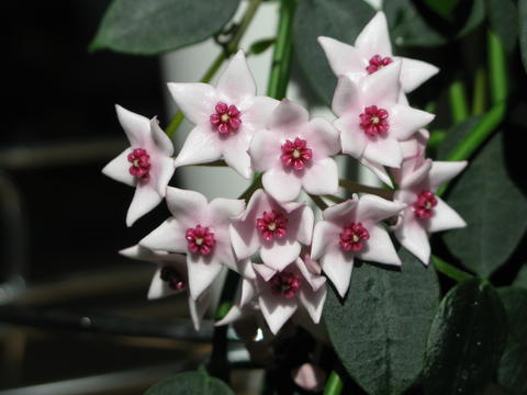 Blüten 2015 - Seite 3 22579285me