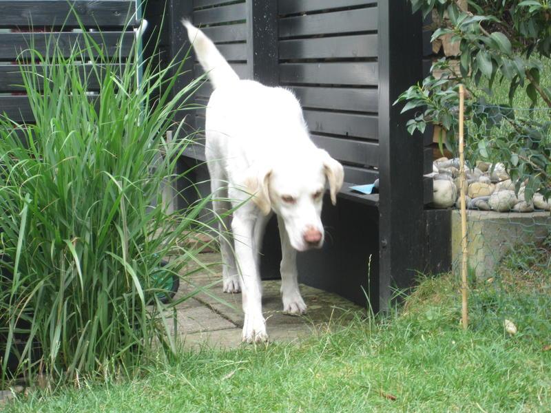 Bildertagebuch - EWALD (nun Jonne), besonderer Hund sucht besondere Menschen...VERMITTELT! 22584617sy